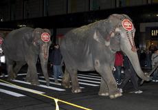 Elephant Walk 2007